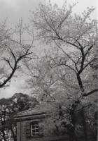 190331_001