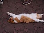41_cat