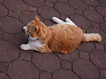 43_cat