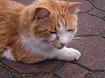 44_cat