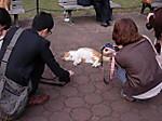 45_cat