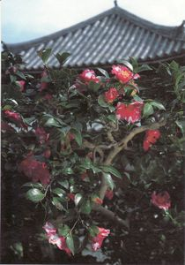 Scan10001_1024